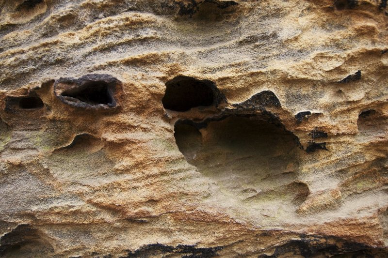 Awesome rock textures. Here is a zoomed in look at a typical piece of sandstone at the Red.