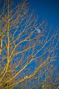 The Moon caught in a Tree