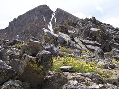Rock Climbing Photo: flowers and snow