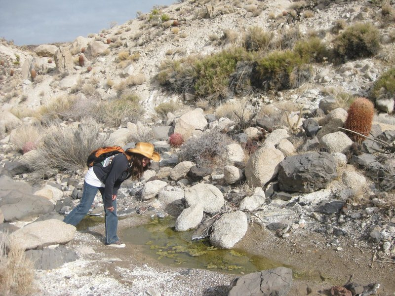 Exploring yet another spring, and watering holes in the Mojave Desert. It's good to know where the water is in the desert; you never know when you'll be stranded. : )<br> <br> Taken 12/29/09