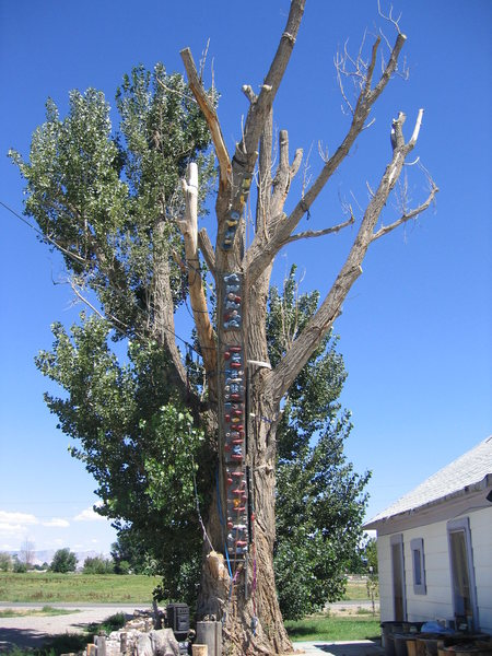 "Terry's climbing wall tree.<br> Holds mounted to board, then fastened to tree. Adjacent chains used for ""bolts"" when leading. Also, tree functions as a multiple highline anchor (line seen left)."