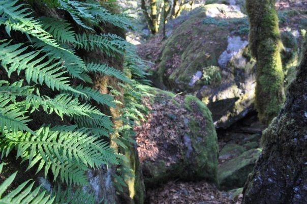 Rock Climbing Photo: Entry to the Garden