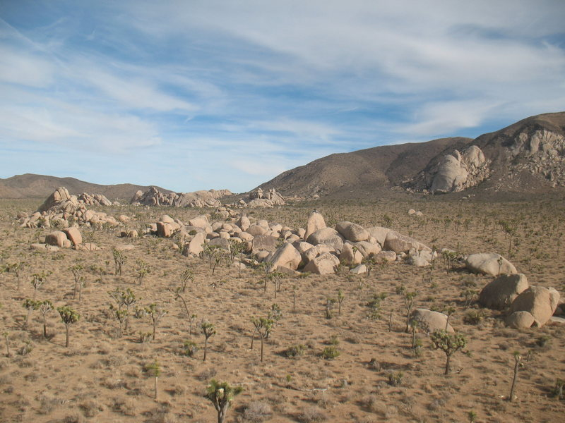 An overview of the Planet X Area, Joshua Tree NP <br>