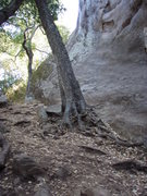 Rock Climbing Photo: Tree at base of Camel