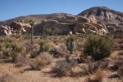 Rock Climbing Photo: West Wall-West Face