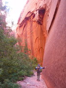 Rock Climbing Photo: South Fork, Taylor Creek. Monolithic walls tower o...
