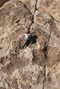 """Rock Climbing Photo: Bluto soloing """"Who's First"""". Photo by Fr..."""