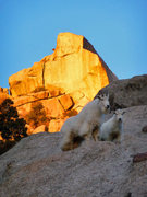 Rock Climbing Photo: Robbin's Crack is the wide beast left of Mr. Goat....