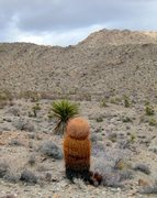 Rock Climbing Photo: A gynormous Red Barrel Cocktus at the site of an a...
