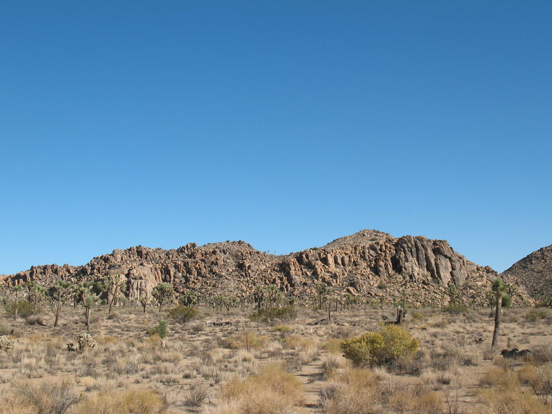 The Black Rocks, Joshua Tree NP