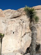 Rock Climbing Photo: Climbers on Stick to What (5.9 R), Joshua Tree NP