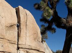"Rock Climbing Photo: ""Damper"". Photo by Locker."