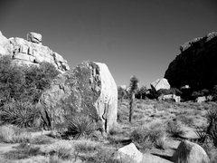 Rock Climbing Photo: Necco Boulder, Joshua Tree NP
