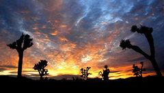 Rock Climbing Photo: J-Tree sunset, Photo by Blitzo.