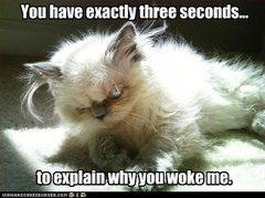 Troll cat says...