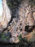 Rock Climbing Photo: Cobra Wall - Climbers from left to right on Cobra ...