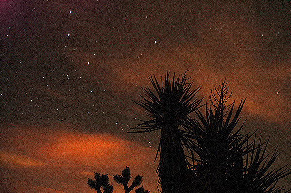Joshua Tree nighttime.<br> Photo by Blitzo.