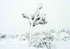 Rock Climbing Photo: A snowy day in Joshua Tree. Photo by Blitzo.