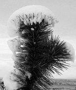 Rock Climbing Photo: Snow capped yucca. Photo by Blitzo.