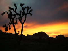 Rock Climbing Photo: New Year's Day at Joshua Tree National Park.