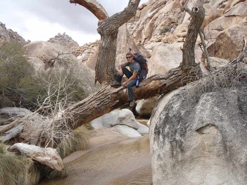 A nice photo opportunity while looking for a route in Rattlesnake Canyon-Jtree Ntnl. Park