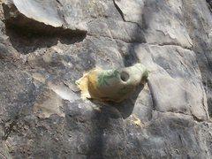 Rock Climbing Photo: why not?
