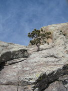 Rock Climbing Photo: Looking up at belay #2 and the final pitch of Jets...
