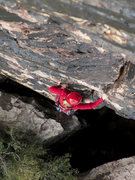 Rock Climbing Photo: Holly on P1 of Birdland