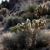 Lots of cactus,<br> Photo by Blitzo.