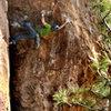 Eldorado Canyon, Kloeberdanz<br> Adam Brink