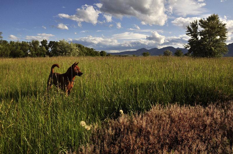 Second favorite dog walk (second to Eldo)