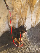 Rock Climbing Photo: Dog Anchor