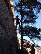 Rock Climbing Photo: Climbing the tree to start the 1st pitch