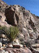 Rock Climbing Photo: Boogie Nights. Photo by Blitzo.