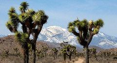 Rock Climbing Photo: San Gorgonio from Queen Valley. Photo by Blitzo.
