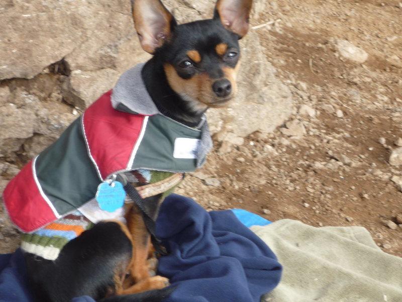 Rock Climbing Photo: Cold crag dog.