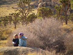 """Rock Climbing Photo: Desert """"flowers"""""""
