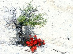 Rock Climbing Photo: Crystal mountain, west desert, UT