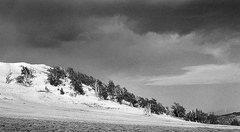 Rock Climbing Photo: Bristlecone Pines. Photo by Blitzo.