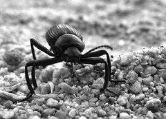 Rock Climbing Photo: Stink Bug. Photo by Blitzo.