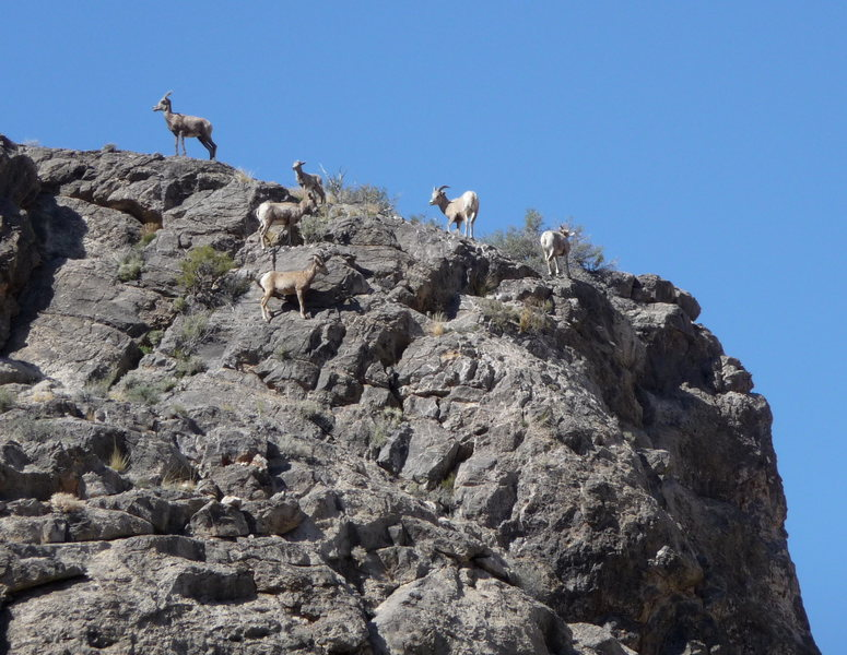 Rock Climbing Photo: Some of the wildlife that you might encounter at t...