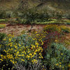 Wildflowers in Pinto Basin.<br> Photo by Blitzo.