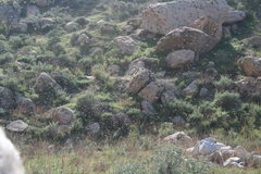 Rock Climbing Photo: Swarm of Bees.  3-13-10