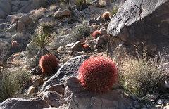 Rock Climbing Photo: Lots of cactus. Photo by Blitzo.