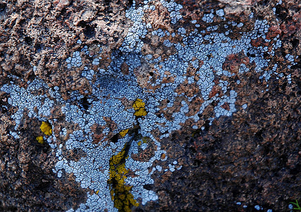 Weird blue lichen.<br> Photo by Blitzo.