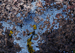 Rock Climbing Photo: Weird blue lichen. Photo by Blitzo.