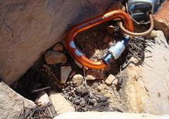 Rock Climbing Photo: Tiny Snake at Red Rocks