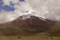 Rock Climbing Photo: Wild horses on the plain below Cotopaxi, Ecuador.