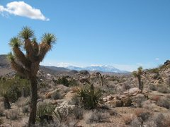 Rock Climbing Photo: San Jacinto and yuccas, Joshua Tree NP