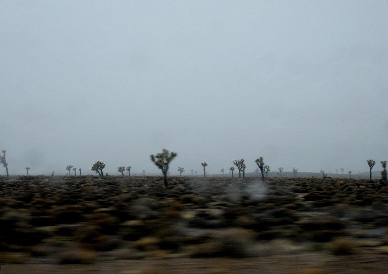 'Joshua Trees in the Mist'<br> <br> SoNv<br> <br> January 2010